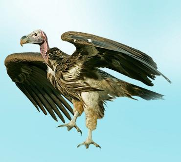 две группы крупных птиц отряда хищных, объединяемые из-за