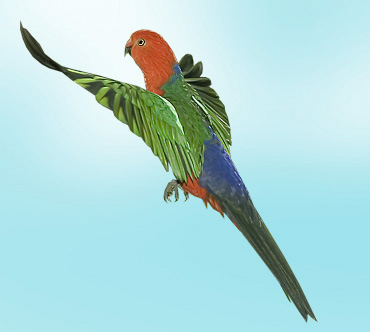 Птиц птица с зелёного цвета и