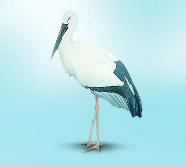 http://www.theanimalworld.ru/img/encycl/birds/big/dalnevostochnyj_aist.jpg