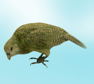 """Конкурс """"Птицы"""" - Страница 2 Kakapo"""