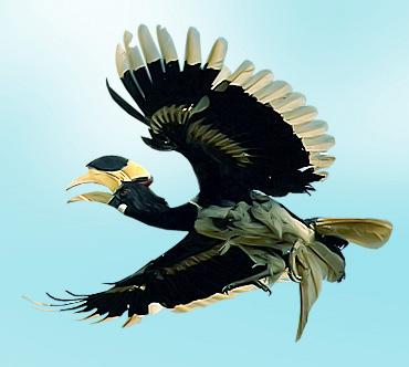 носорог птица фото