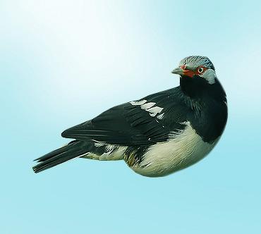 Описание птицы