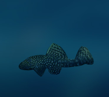 http://www.theanimalworld.ru/img/encycl/fish/big/antsistrus_zvezdnyj.jpg